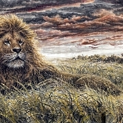 狮子@梁震龙