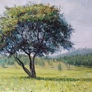 树的风景@王德财