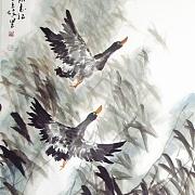 微湖@刘志红