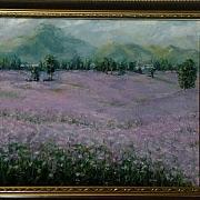 紫色熏衣草·紫色印象